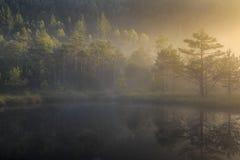 Bog lake in morning fog Royalty Free Stock Photo