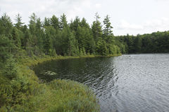 Bog Lake stock photography