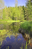 Bog lake  - national park Sumava Royalty Free Stock Image