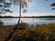 Bog lake Royalty Free Stock Image