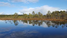 Bog lake Royalty Free Stock Photos