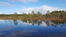 Bog lake. In Viru Bog, Estonia royalty free stock photos