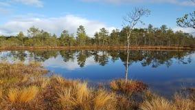 Bog lake. In Viru Bog, Estonia Royalty Free Stock Image