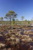 Bog landscape. In the autumn Stock Photo