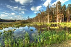 Bog Landscape Royalty Free Stock Image