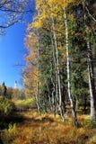 Bog Landscape in Allgaeu Stock Photo