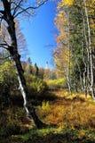 Bog Landscape in Allg�u Stock Photos