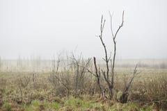 Bog landscape with fog Stock Photography