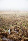 Bog landscape with fog Royalty Free Stock Photo