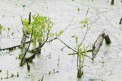 Bog. Landscape with the image of bog stock photo