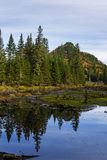 Bog Landscape Stock Images