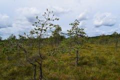Bog in the landscape of Kemeri National Park, in autumn, selective focus. Latvia.  stock photo