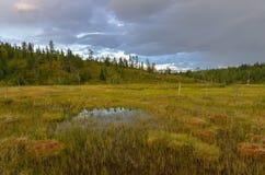 Bog landscape. Bog landscape in northern Finland stock photo