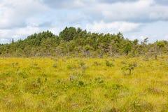 Bog landscape Stock Photography