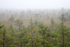 Bog landscape with trees in swamp Royalty Free Stock Photos