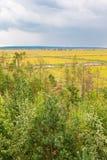 Bog landscape view Stock Image