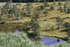 Bog of Luitel Lake Stock Images
