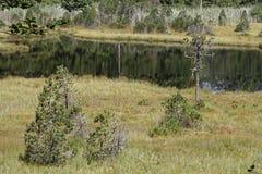 The bog of Luitel Lake Stock Image