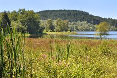 Bog  of the Morvan (France) Stock Photography