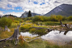 Bog in  mountains Royalty Free Stock Photography