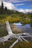 Bog in  mountains and snags on coast Royalty Free Stock Photo
