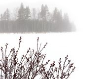 Bog myrtle twigs by a frozen lake. Bog myrtle twigs by a snowy frozen lake with foggy forest landscape in the background royalty free stock image