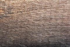 Bog oak maro texture. Bog oak macro texture. High resolution photo royalty free stock images