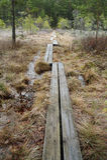 Bog scenery Royalty Free Stock Image
