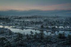 Bog with small pine trees covered in early winter morning frost Stock Photos