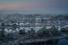 Bog with small pine trees covered in early winter morning frost Royalty Free Stock Photography