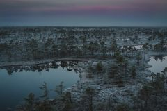Bog with small pine trees covered in early winter morning frost Stock Image