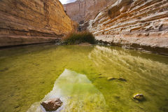 Bog in spectacular canyon royalty free stock photography