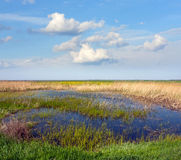 Bog in steppe Stock Images