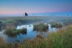 Bog during summer sunrise. Fochteloerveen, Netherlands Stock Images