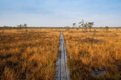 Bog in sunny autumn day Stock Image