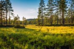 Bog sunset. Sunset at bog. Finnish landscape royalty free stock photo