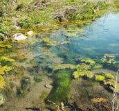 Bog swamp Royalty Free Stock Image