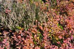 Bog vegetation Stock Image