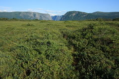 Bog at Western Brook Royalty Free Stock Photography