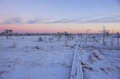 Bog in Winter Royalty Free Stock Photography