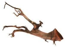Bog wood. Over white background royalty free stock images