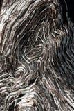 Bog-wood texture Stock Images