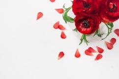 Bogatej czerwieni jaskier kwitnie w wazie z płatka odgórnym widokiem na miękkim białym drewnianym stole Eleganci wiosny bukiet zdjęcie royalty free