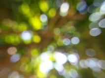 Bogeh naturel Photos libres de droits