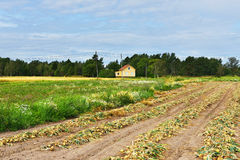 Bogen auf Feld Ernte im Spätsommer Lizenzfreie Stockfotos