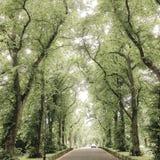 Bogen der Bäume Lizenzfreies Stockbild