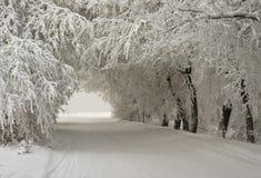 Bogen der schneebedeckten Bäume stockbilder