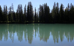 Bogen-Fluss-Baumgrenze Stockfoto
