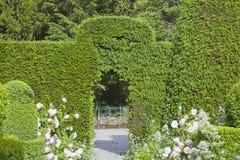 Bogen in getrimmter grüner Hecke im Topiarygarten lizenzfreie stockbilder