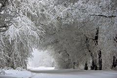 Bogen von schneebedeckten Bäumen stockfotos